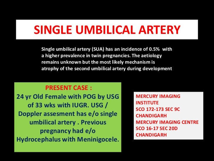 SINGLE UMBILICAL ARTERY<br />Single umbilical artery (SUA) has an incidence of 0.5%  with<br />a higher prevalence in twin...