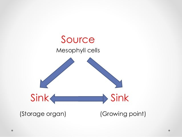 source and sink relationship in rice