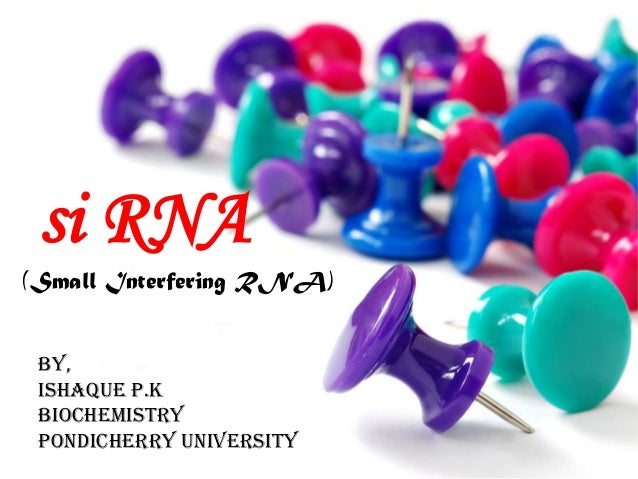 si RNA (Small Interfering RNA) By, ISHAQUE P.K BIOCHEMISTRY pondicherry university