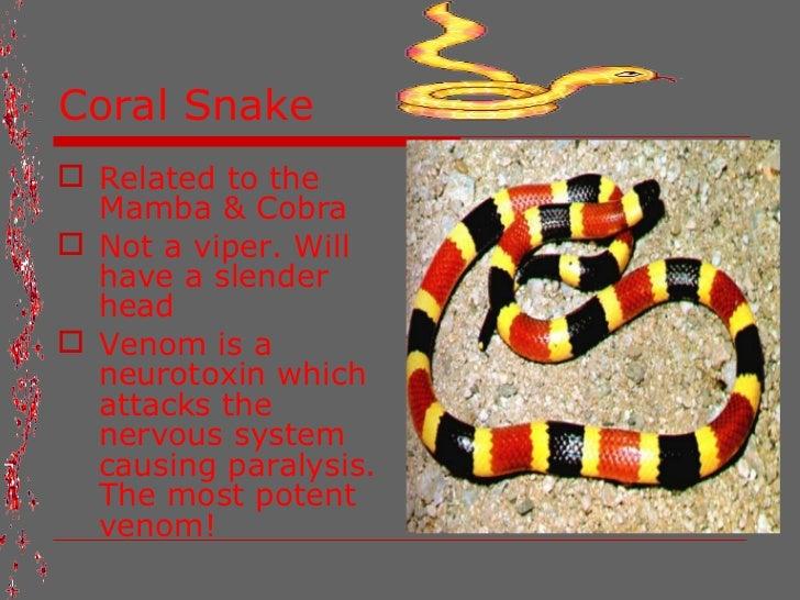 fact of snakes.. Viper Snake Head