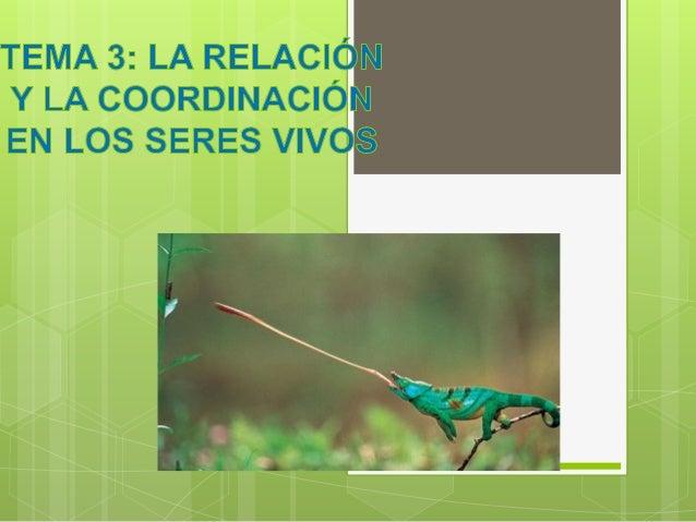 LA FUNCIÓN DE RELACIÓN La función de relación permite a los seres vivos captar los estímulos que nos rodean y responder a ...