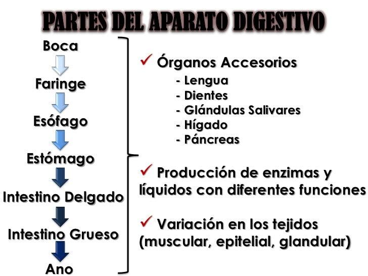 PPS - Sistema Digestivo