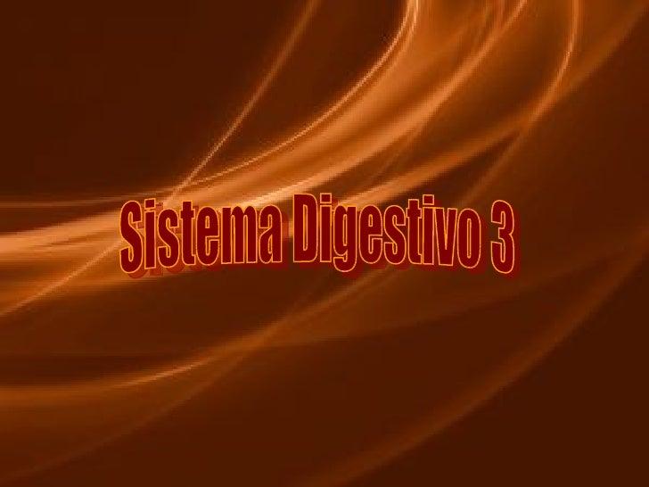 Sistema Digestivo 3
