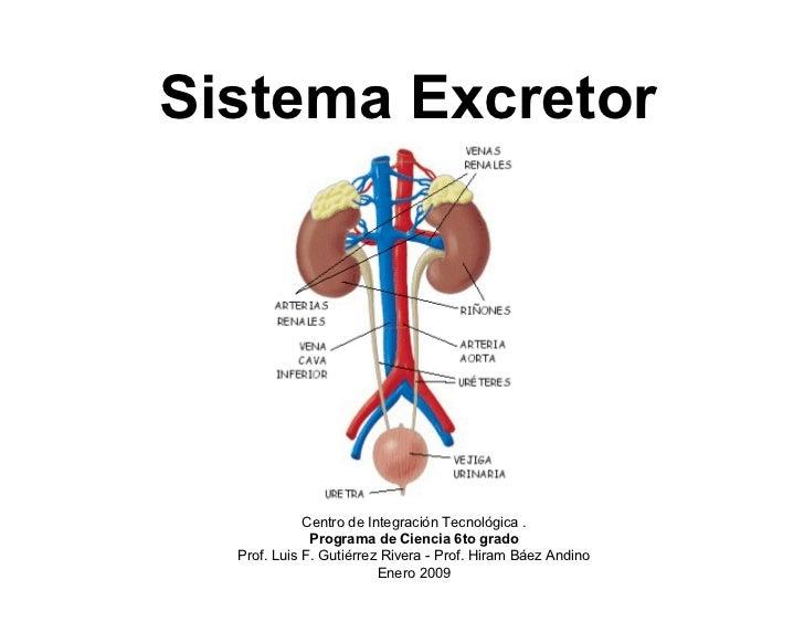 Investigando sobre funciones del sistema excretor
