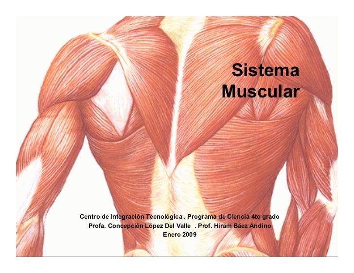 Sistema                                               Muscular     Centro de Integración Tecnológica . Programa de Ciencia...