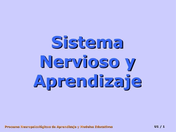 Sistema Nervioso y Aprendizaje