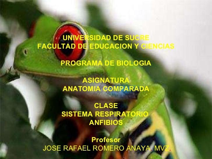Sistema  Respiratorio En  Anfibios