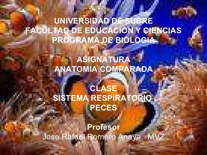UNIVERSIDAD DE SUCRE FACULTAD DE EDUCACION Y CIENCIAS PROGRAMA DE BIOLOGIA ASIGNATURA ANATOMIA COMPARADA CLASE SISTEMA RES...
