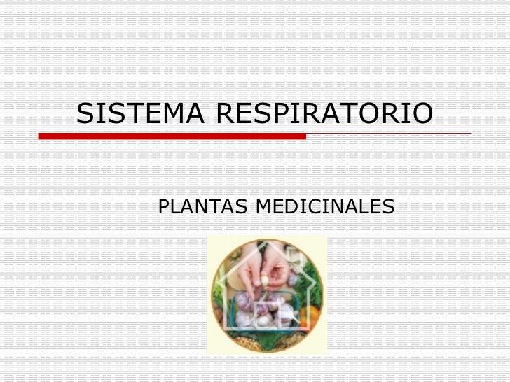 SISTEMA RESPIRATORIO PLANTAS MEDICINALES