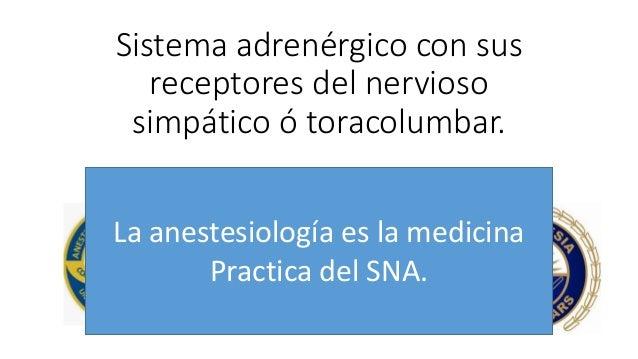 Sistema adrenérgico con sus receptores del nervioso simpático ó toracolumbar. Dr. Salvador Filippo chimento vilaró Residen...