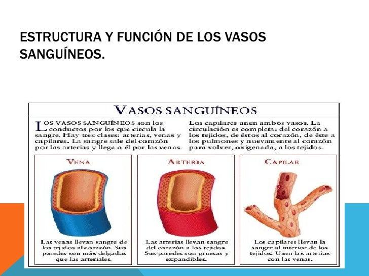 Los ungüentos de interior varikoza