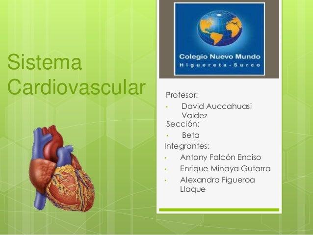 Sistema Cardiovascular Integrantes: • Antony Falcón Enciso • Enrique Minaya Gutarra • Alexandra Figueroa Llaque Sección: •...