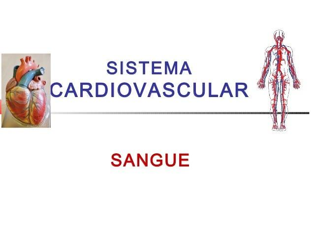 Sistema cardiovascular   sangue (1)