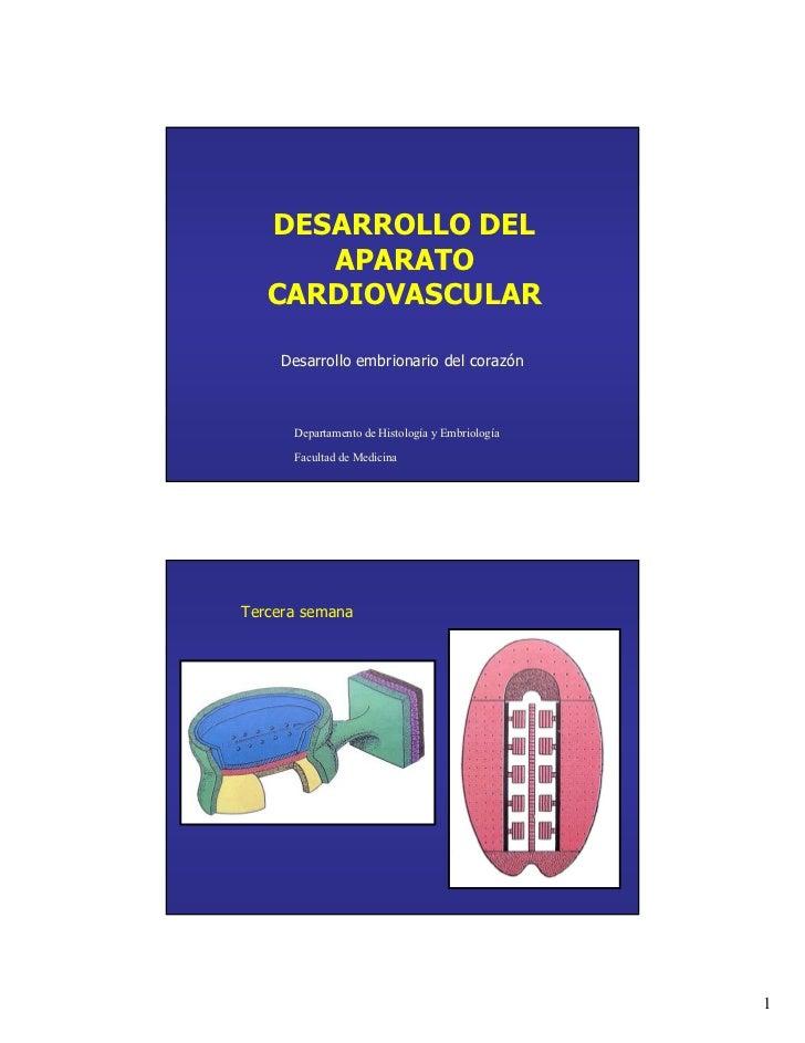 DESARROLLO DEL      APARATO   CARDIOVASCULAR    Desarrollo embrionario del corazón      Departamento de Histología y Embri...