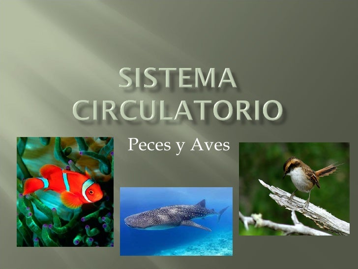 Peces y Aves