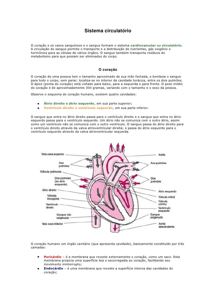 Sistema circulatório <br /><br />O coração e os vasos sanguíneos e o sangue formam o sistema cardiovascular ou circulatór...