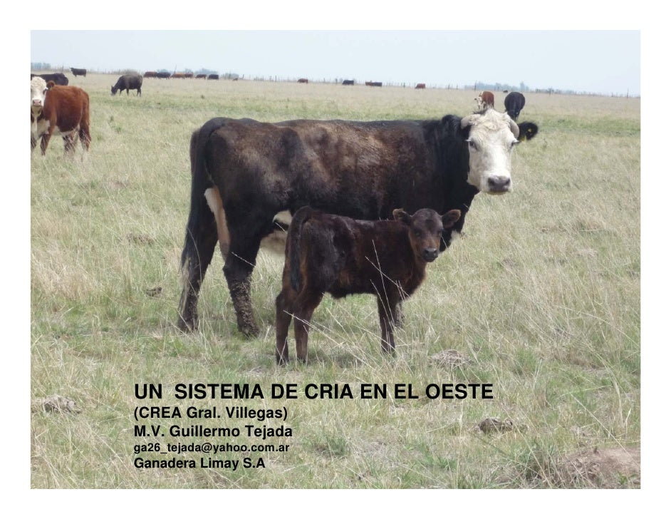UN SISTEMA DE CRIA EN EL OESTE (CREA Gral. Villegas) M.V. Guillermo Tejada ga26_tejada@yahoo.com.ar Ganadera Limay S.A