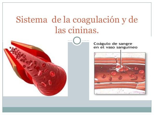 Sistema de la coagulación y de         las cininas.