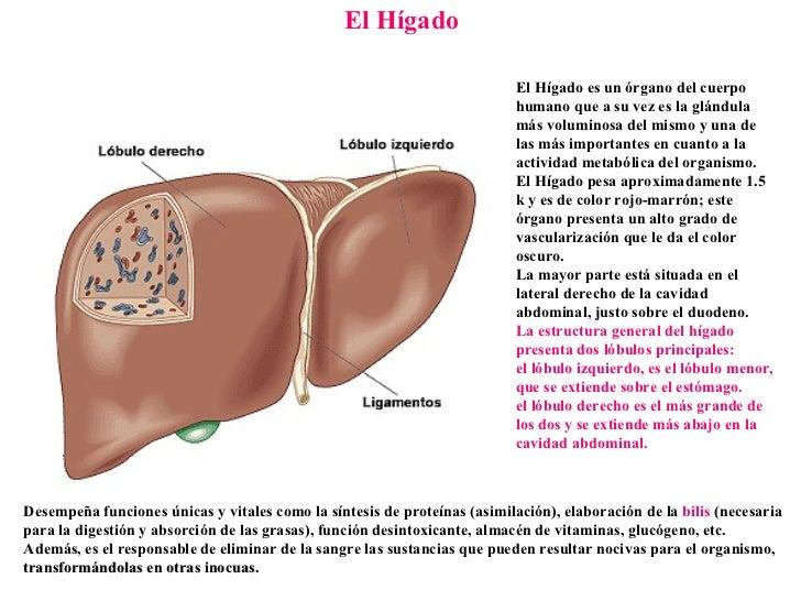 Excelente Ubicación Hígado Y La Función Friso - Anatomía de Las ...