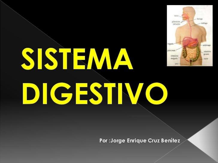 SISTEMA DIGESTIVO<br />Por :Jorge Enrique Cruz Benítez<br />