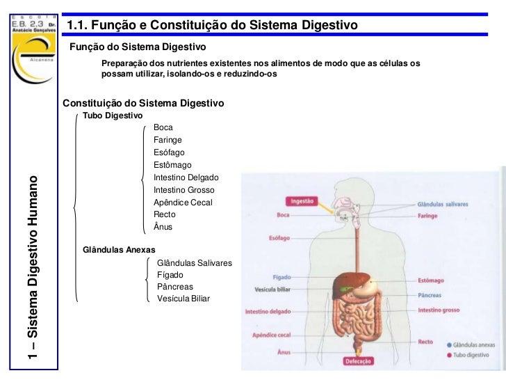 1.1. Função e Constituição do Sistema Digestivo                                Função do Sistema Digestivo                ...