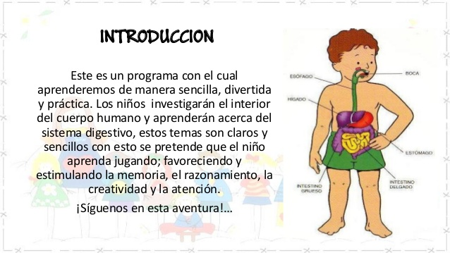 sistema-digestivo-liliana- ...