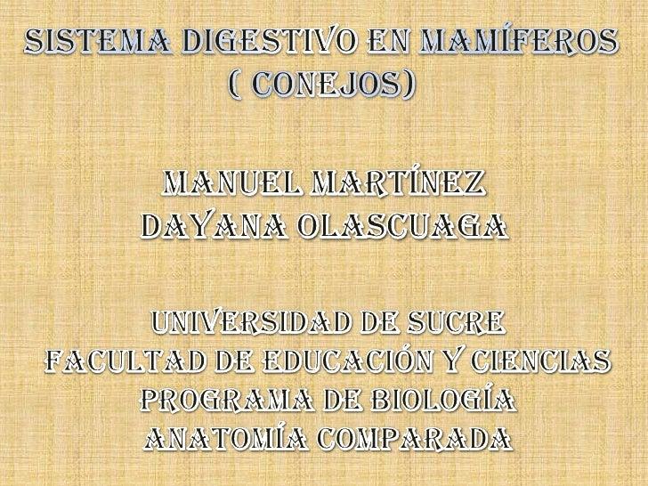 SISTEMA DIGESTIVO EN MAMÍFEROS<br />( CONEJOS)<br />MANUEL MARTÍNEZ<br />DAYANA OLASCUAGA<br />UNIVERSIDAD DE SUCRE<br />F...