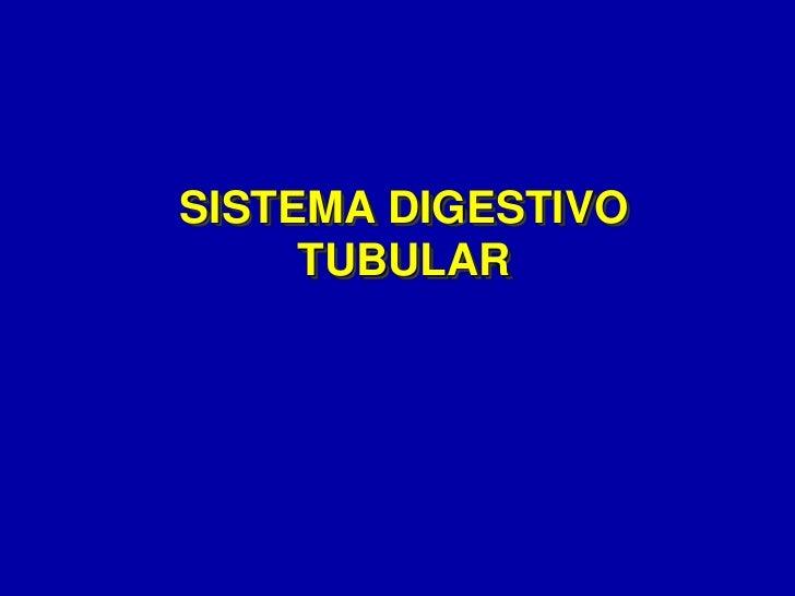 Sistema digestivo tubular