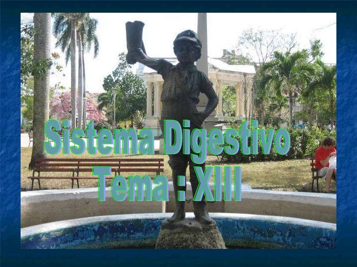 Sistema digestivo y glándulas anexas