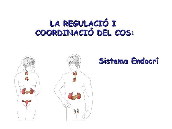 Sistema endocrí