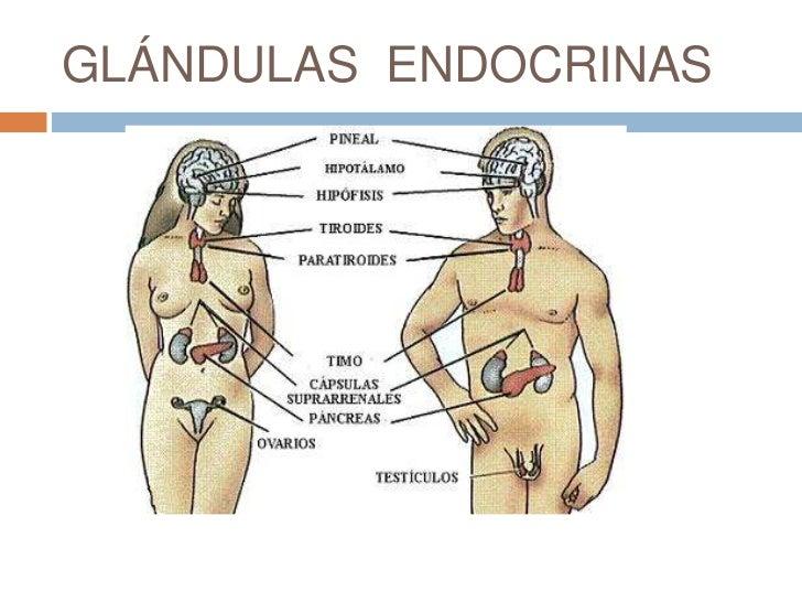 Blog de clase de Samuel Sandoval: Sistema endocrino