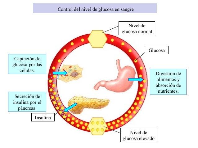 Sistema endocrino - Alimentos bajos en glucosa ...