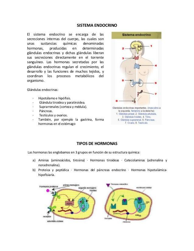 SISTEMA ENDOCRINO El sistema endocrino se encarga de las secreciones internas del cuerpo, las cuales son unas sustancias q...