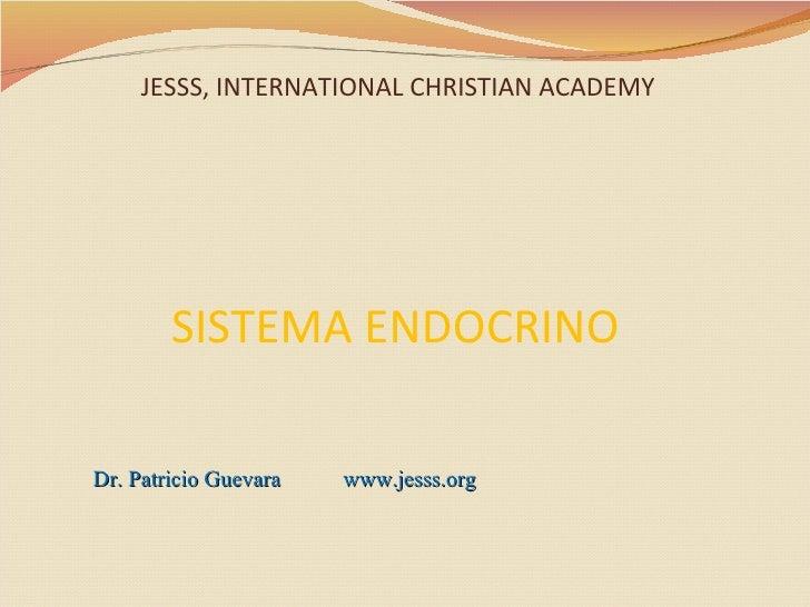 Sistema endocrino anatomía