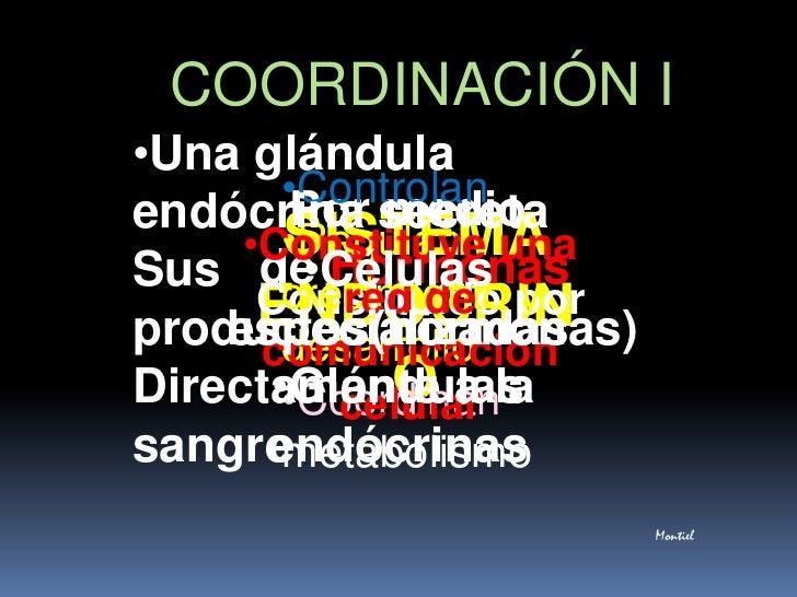COORDINACIÓN I<br /><ul><li>Una glándula endócrina secreta</li></ul>Sus productos(hormonas)<br />Directamente a la sangre<...