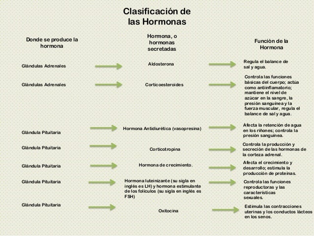 Sistema Endocrino Presentación PDF