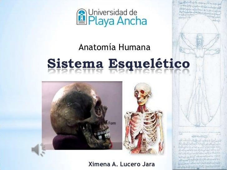 Anatomía HumanaSistema Esquelético      Ximena A. Lucero Jara