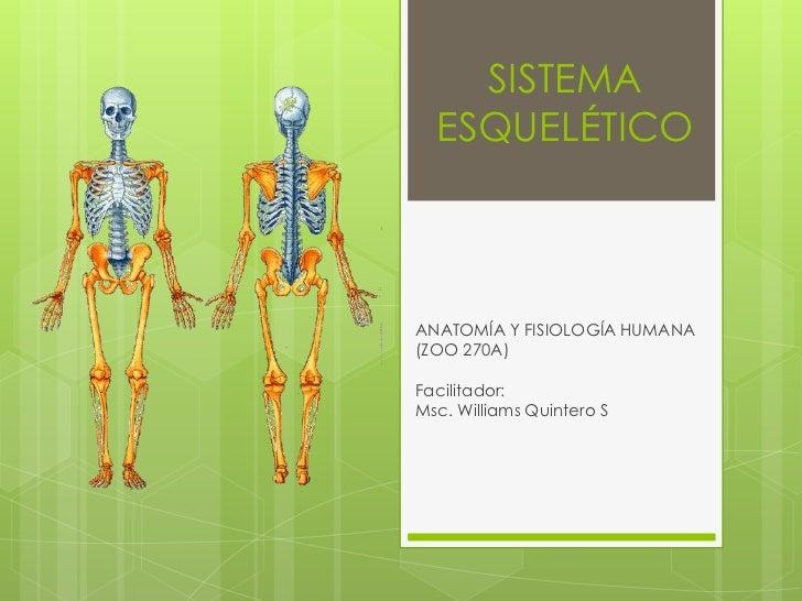 SISTEMA  ESQUELÉTICOANATOMÍA Y FISIOLOGÍA HUMANA(ZOO 270A)Facilitador:Msc. Williams Quintero S