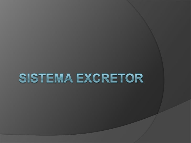 SISTEMA EXCRETOR<br />