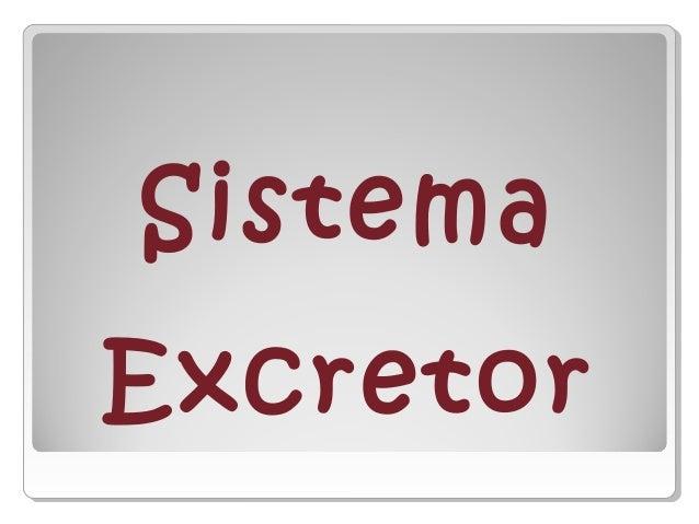 Sistema excretor i