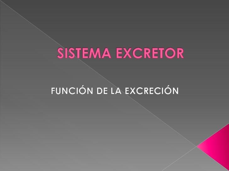 SISTEMA EXCRETOR<br />FUNCIÓN DE LA EXCRECIÓN<br />