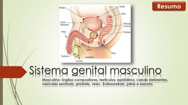 Resumo  Sistema genital masculino  Masculino: órgãos compositores, testículos, epidídimo, canais deferentes,  vesículas se...