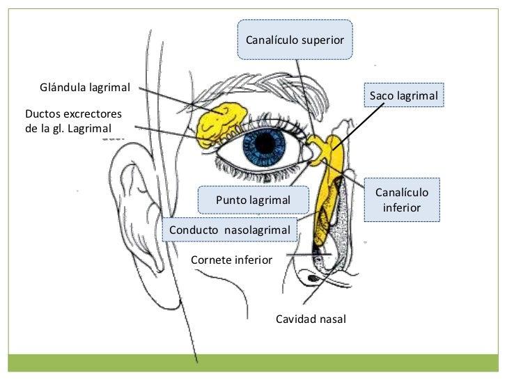 Semiología Quirúrgica : Examen Físico de la Cabeza