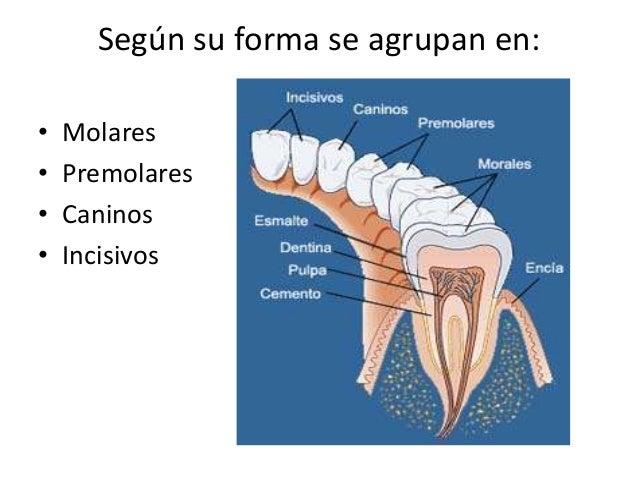 Los ungüentos dikulya a la osteocondrosis de la columna vertebral