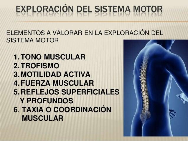 ELEMENTOS A VALORAR EN LA EXPLORACIÓN DELSISTEMA MOTOR1.TONO MUSCULAR2.TROFISMO3.MOTILIDAD ACTIVA4.FUERZA MUSCULAR5.REFLEJ...