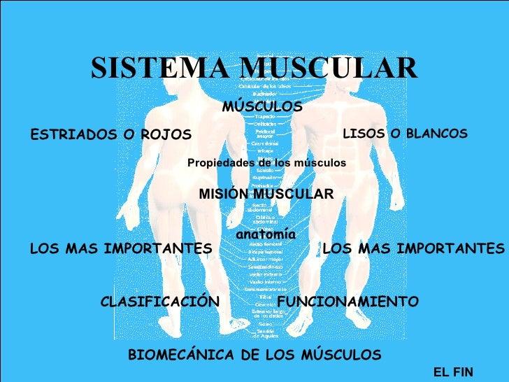 SISTEMA MUSCULAR MÚSCULOS ESTRIADOS O ROJOS LISOS O BLANCOS Propiedades de los músculos LOS MAS IMPORTANTES LOS MAS IMPORT...