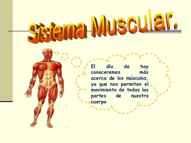 El día de hoy conoceremos más acerca de los músculos, ya que nos permiten el movimiento de todas las partes de nuestro cue...