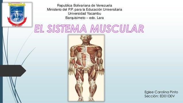 Republica Bolivariana de Venezuela Ministerio del P.P. para la Educación Universitaria Universidad Yacambu Barquisimeto – ...