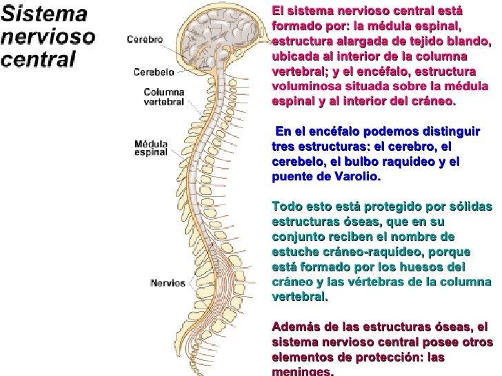 A la inflamación de los riñones puede estar enferma la espalda