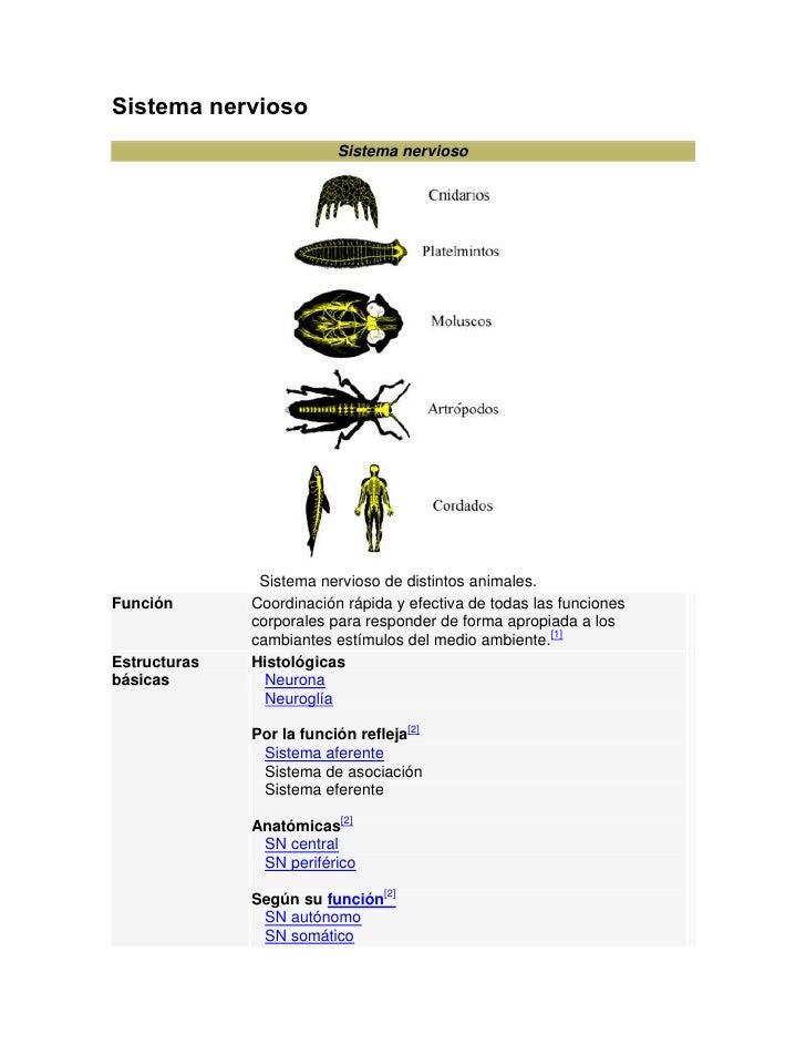 Sistema nervioso                           Sistema nervioso                    Sistema nervioso de distintos animales. Fun...